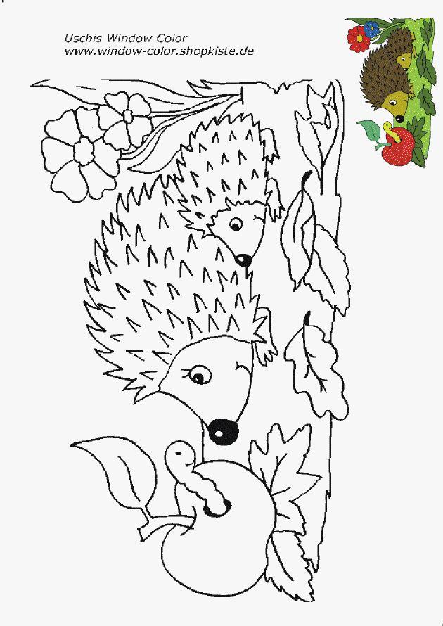 hedgehog and apple  igel ausmalbild malvorlagen tiere