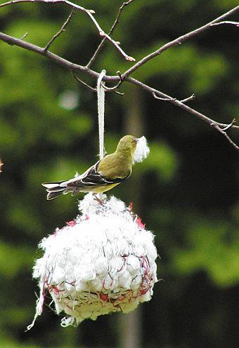105 Best Images About Back Yard Birding On Pinterest