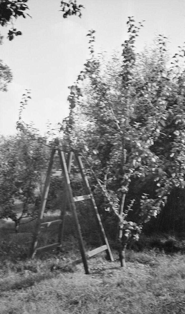 Apple picking steps, Bignor, Sussex photographed by Paul Nash