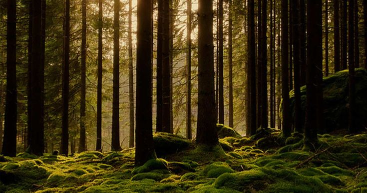 Help Save #Elfdalian, the Ancient #Viking Forest Language of #Sweden
