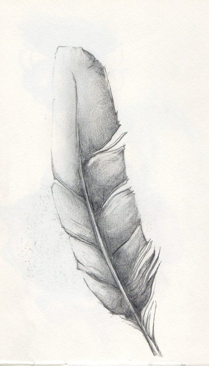 http://th05.deviantart.net/fs70/PRE/i/2010/236/5/f/Feather_Sketch_by_SparkyToraInk.jpg