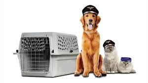 We are providing pet shipping service for all our customers. We are providing affordable, professional animal transportation in the most convenient way for our customers and their pets.