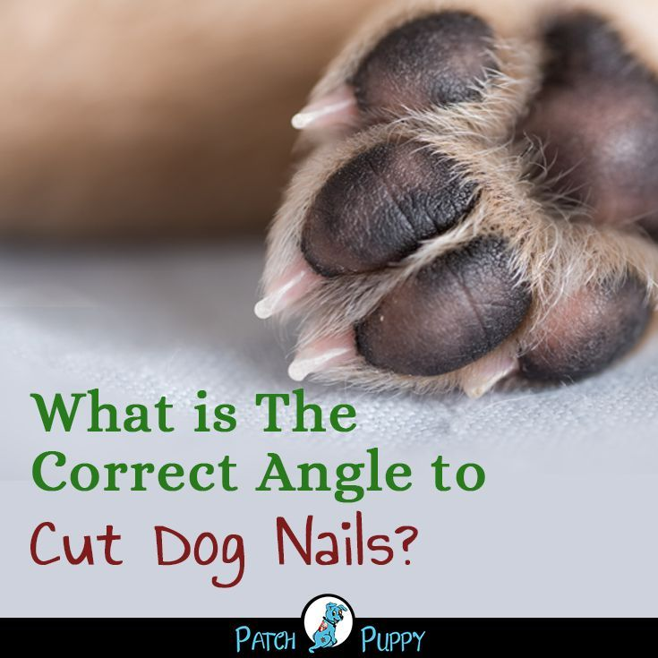 Pin On Dog Care