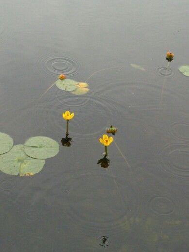 경회루 앞 노란 꽃