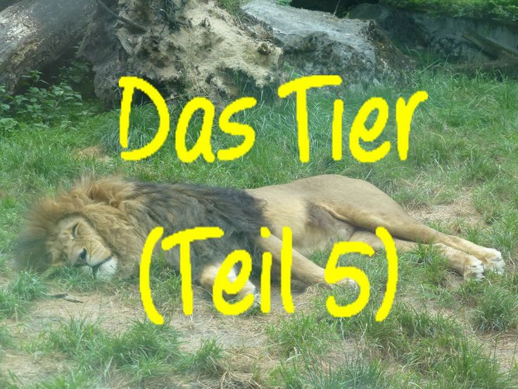 Learn German: Das Tier (Teil 5)