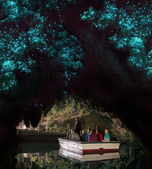 Ever glided under a city of glow worms? A visit to Waitomo is incredible
