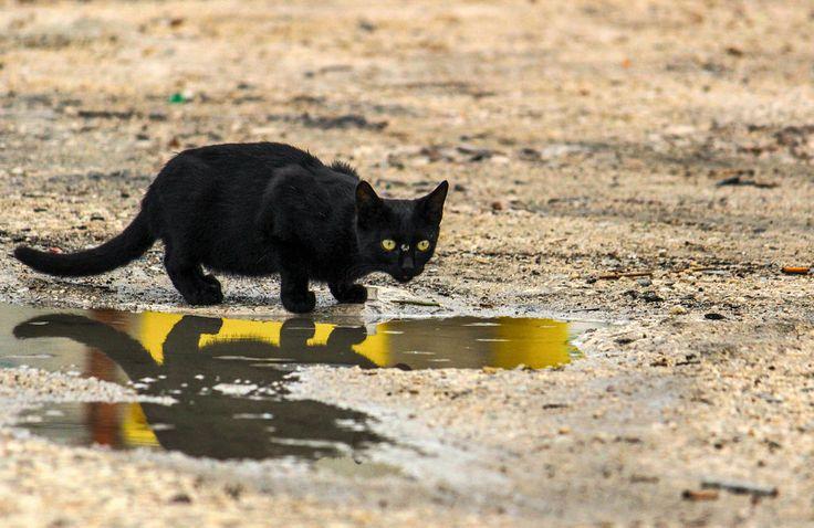 occhi di gatto  © All rights reserved Domenico Donvito