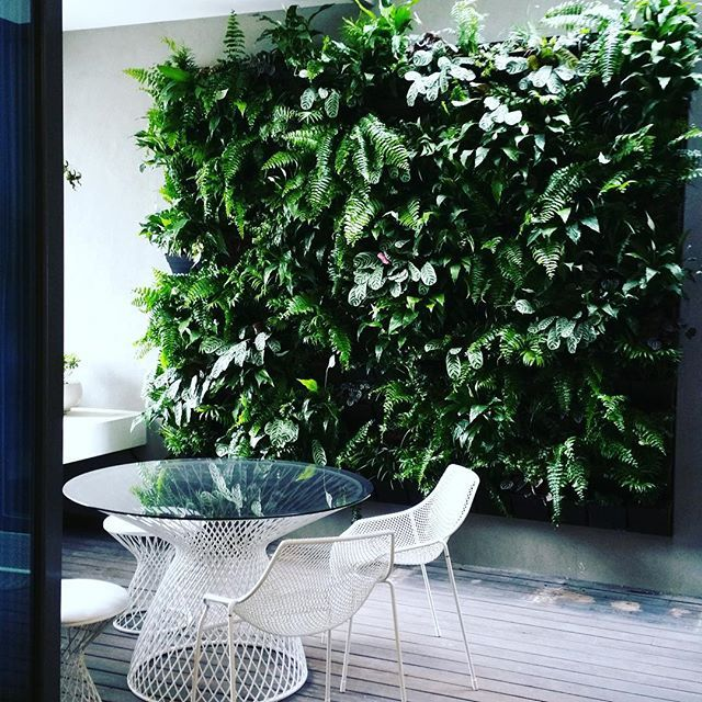 Vertical Garden Ideas Australia 143 best hawthorn east images on pinterest | bluestone pavers
