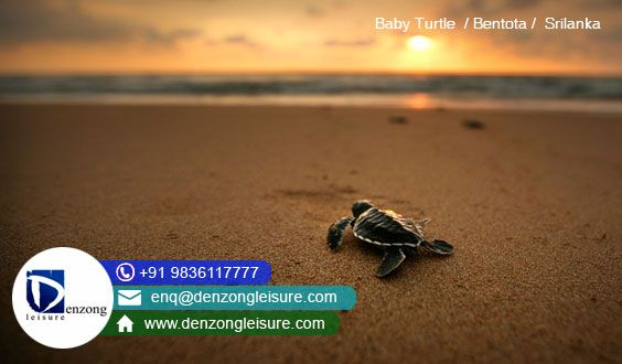 Denzong Leusire Pvt Ltd - offering Sri Lanka Travel & Tourism Packages at best price. Booking at +91 9836117777 | Toll Free 1800 121 4500 | Web: http://www.denzongleisure.com/packages/sri-lanka-tour-packages-from-india