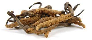 muncord cosycep dipercaya sebagai antii biotik almi yang mapu meningkatkan kesehtan dan menyembuhkan berbagai macam penyakit!