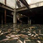 An abandoned Bangkok Shopping Mall with koi carp living in it!