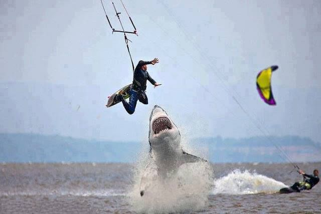 OMG! SHARK ATTACK!!! Read here the real story behind this pic: http://awesomeanimals01.blogspot.co.il/2013/06/omg-shark-attack-real-story-behind-this.html#.UcbCPdgSqxB