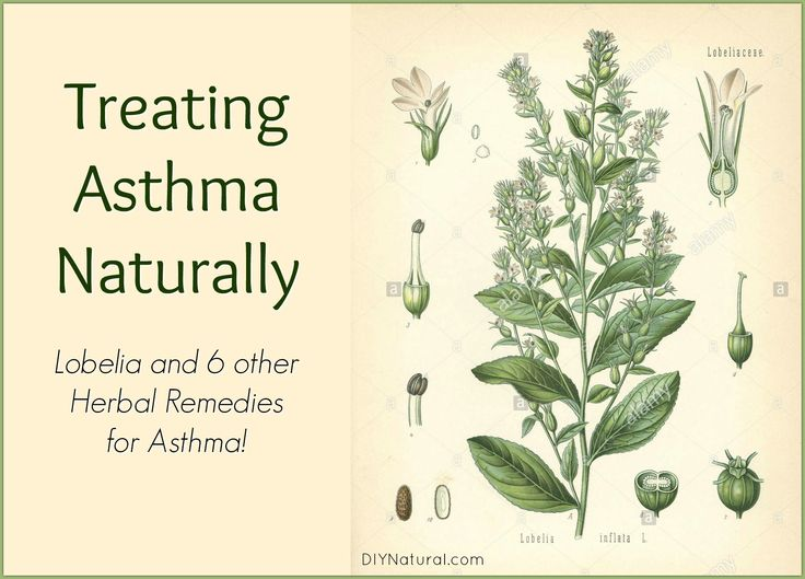 Treating asthma naturally should consist of two strategies: one for the acute symptoms and one addressing lacks in the immune system. These 7 herbs do both.