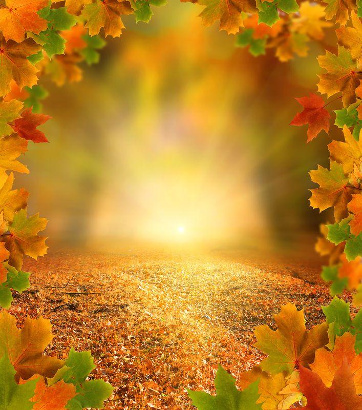 Картинки осень без текста, зайцев