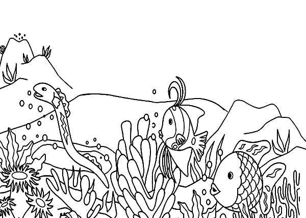 Corn Snake Snake Coloring Pages Animal Coloring Pages Coloring