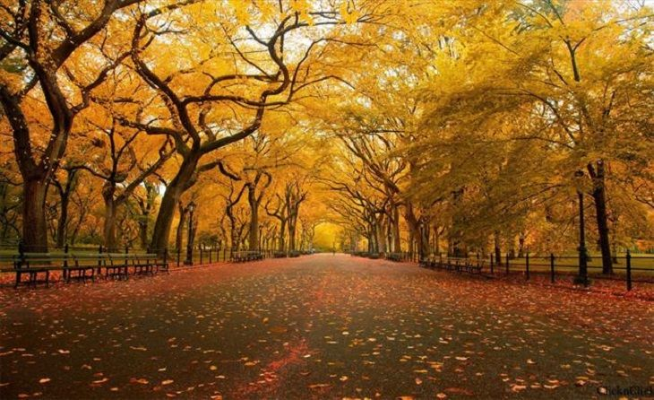Golden arches in Central Park, New York