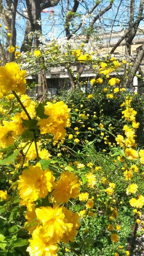 #spring #flower #color explosion #secretmilan