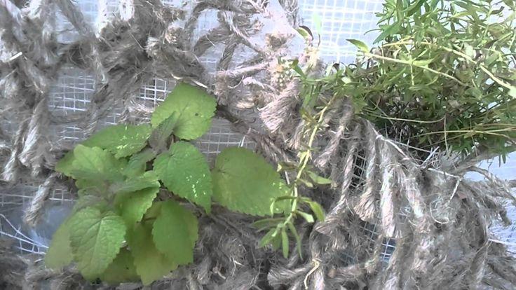 6.Лечебные пряные травы.Растения на стенах.
