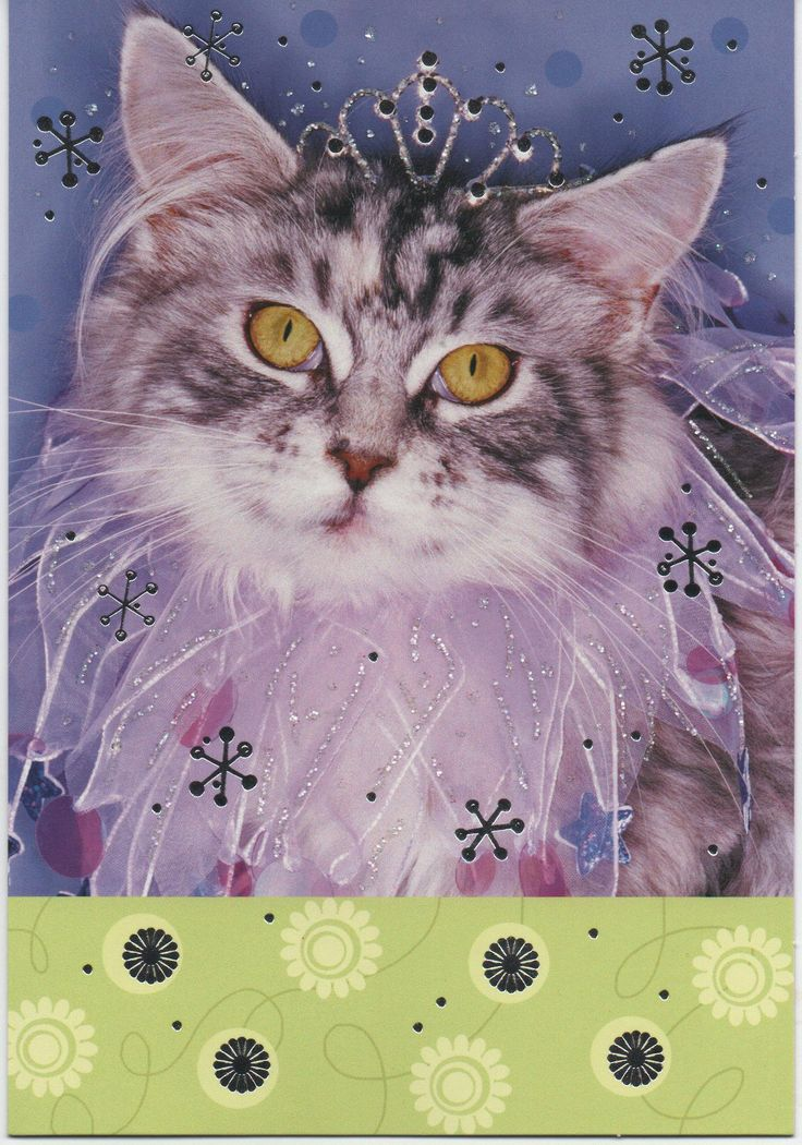 Birthday Card, Cat with Glitter, Can You Still Be Called