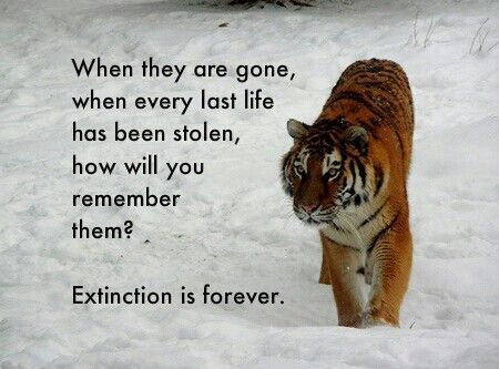 Pin By Lala Sampson Chappelle On Earth Animals Endangered Species