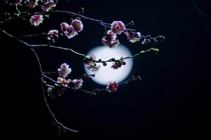 ~ Вдохновение ~: Майская ночь распахнула объятия!