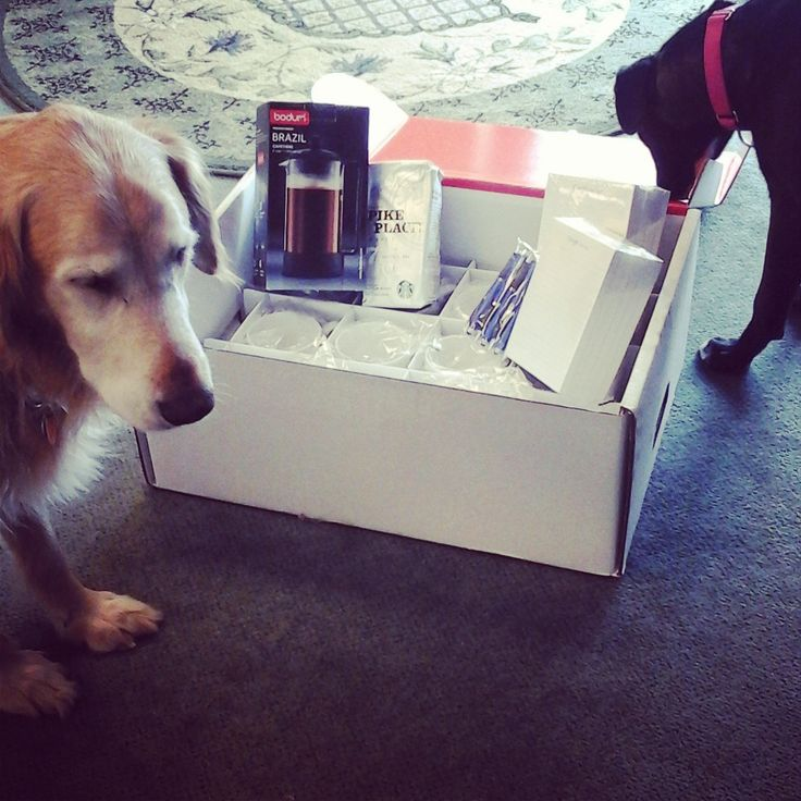 Pups love Google Swag, too!