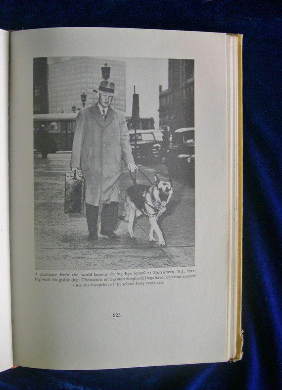 1972 German Shepherd book. The Complete German Shepherd Dog hardback book revised edition. This book has over 150 photos of German Shepherds.