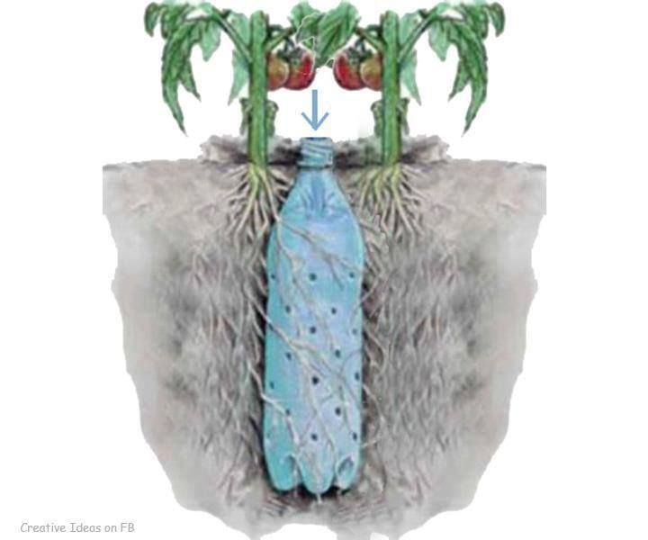Gardening Tip- Easy way to reach the roots of a Container plant, poke holes in a water bottle or soda bottle, bury between a couple seedlings and water as needed.