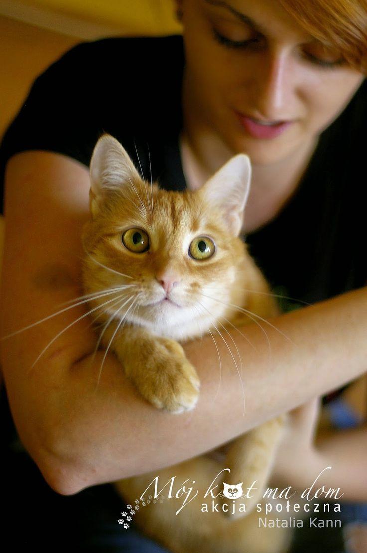 Mój kot ma dom - Akcja społeczna: IV.092