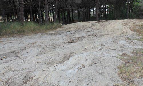 Nature et environnement - Signez la pétition : Préservation et restauration de la pinède de Port Leucate