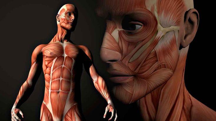 Músculo esquelético: anatomía funcional (I)