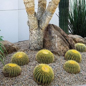 how to plant cactus in the southwest