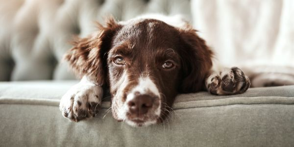 How A Dog Can Lower Your Home S Value Domain With Images Deep Cleaning Tips Cleaning Hacks Clean Dishwasher
