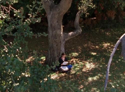 studying outside - my favorite thing about studying in spring / summer