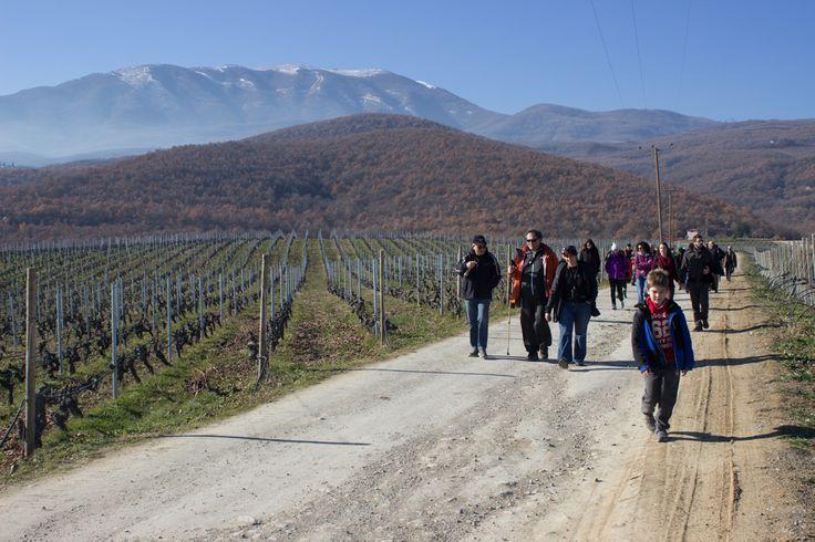 Wine tour during winter time -  #winetasting #taste #trigiro #tours #Greece