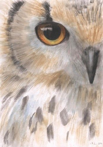 Owl painting. by:-Madara                                                                                                                                                                                 More