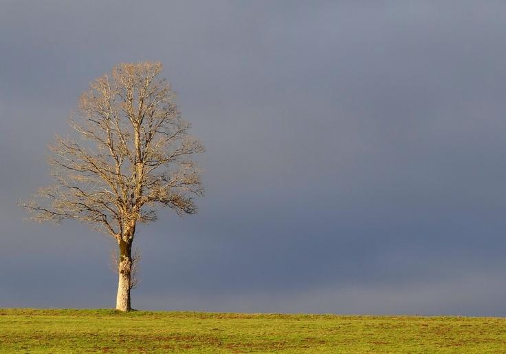 Arbre attendant l'hiver, automne 2012