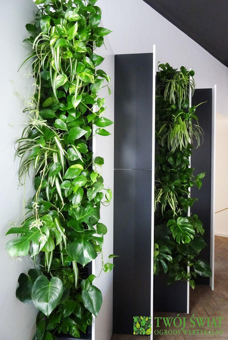 Zielone ściany wkomponowane w regał. #greenwalls #ogrodywertykalne #zielonesciany