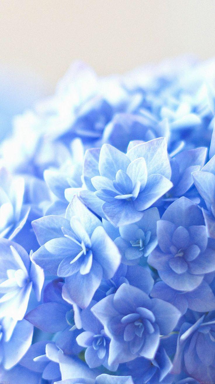 最高の壁紙 ベスト 紫陽花 壁紙 Iphone In 2020 Flower Iphone