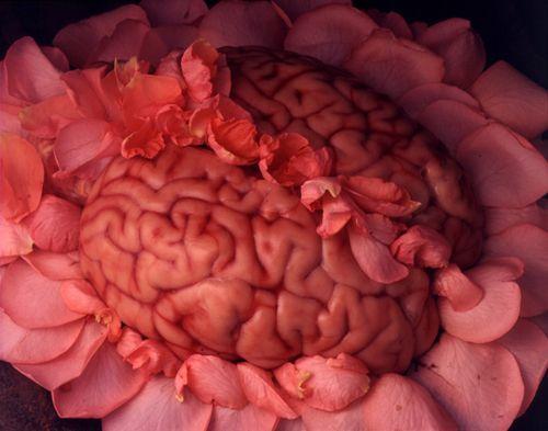 Nazif Topçuoğlu    Rose/Brain, A Roman Dish, 1998