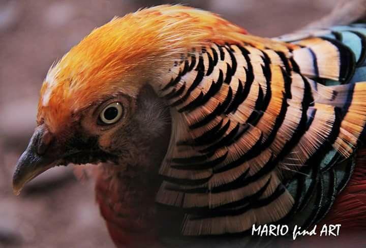 Prety bird