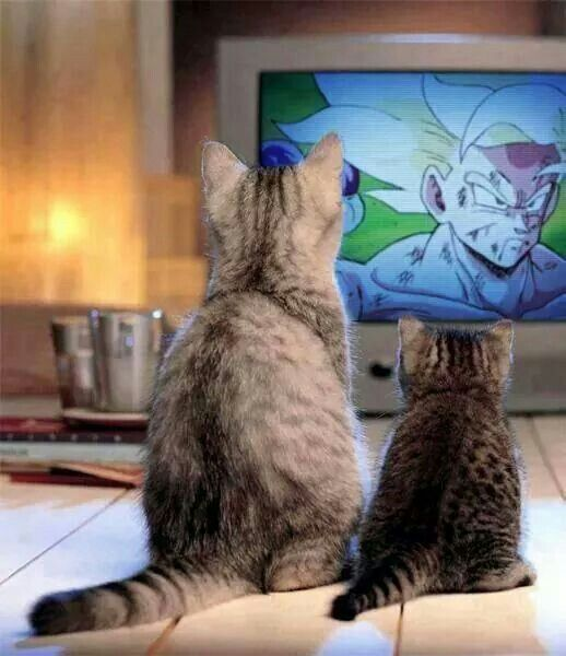 Neko watching dragon ball z lmao. I'm guessing that's the frieza saga xD
