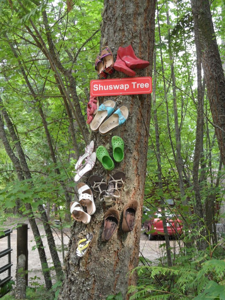 """The """"Shuswap"""" Tree... a place to trade your footwear!"""