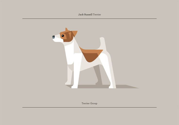 Aliases: Jack  Group: Terrier  Place of Origin: England  Instinct: Small game tracker  Temperament: Intelligent, athletic, energetic, drive, fearless, vocal & moody