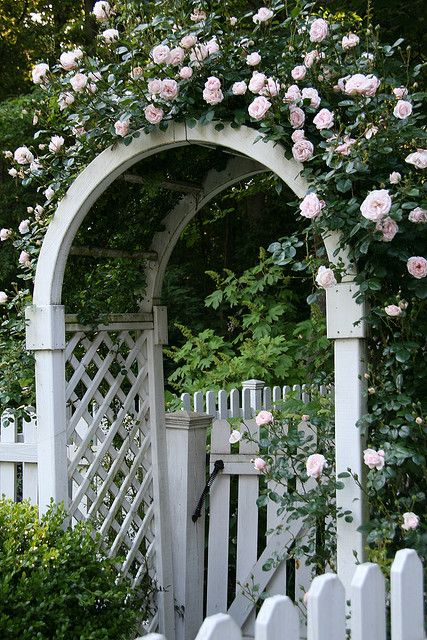 love white picket fences and trelis arbors with pink roses