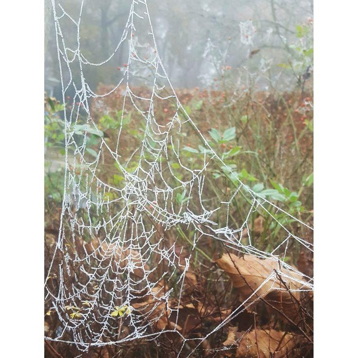 Mooie grote spinneweb gefotografeerd in de mist.