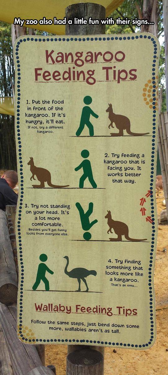 Kangaroo Feeding Tips