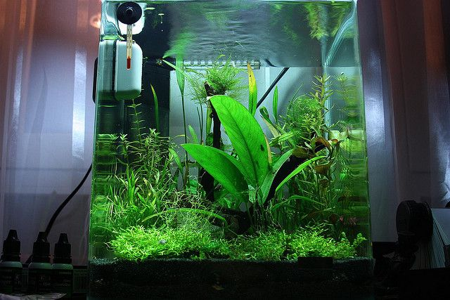 dennerle aquarium | Dennerle Nano 20L Aquarium - a photo on Flickriver