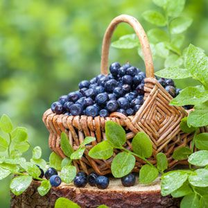 Blueberries are one of the easiest to grow fruits -- and also one of the very best foods, both in flavor and health benefits.