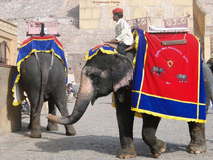 Unsere Frauenreise nach Rajasthan: http://www.vivamundo-reisen.de/Vivamundo_Woman/Indien_woman/Indien_Frauen_2_h.htm